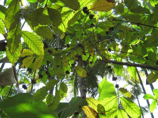 Sahakari Spice Farm: Coffee beans