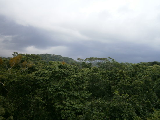 Panama Rainforest Discovery Center: An amazing view at the top!