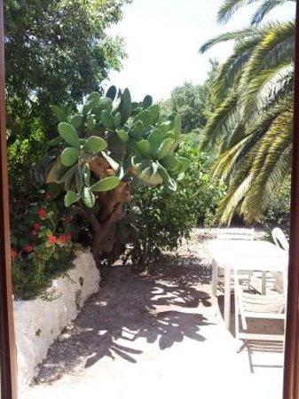 B&B Tra I Frutti: terrasse