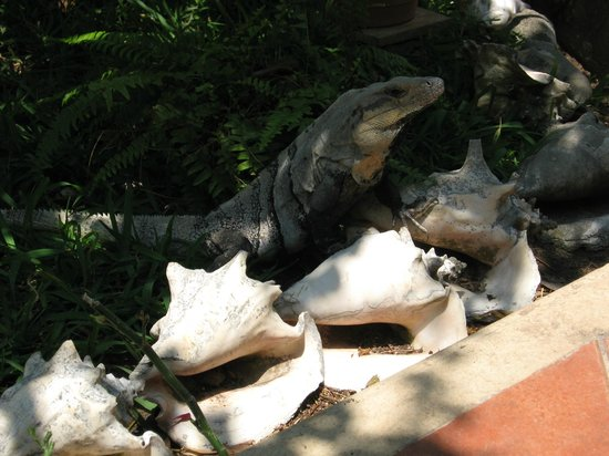 Cabañas Maria del Mar: Iguanas enjoy the shade of the gardens