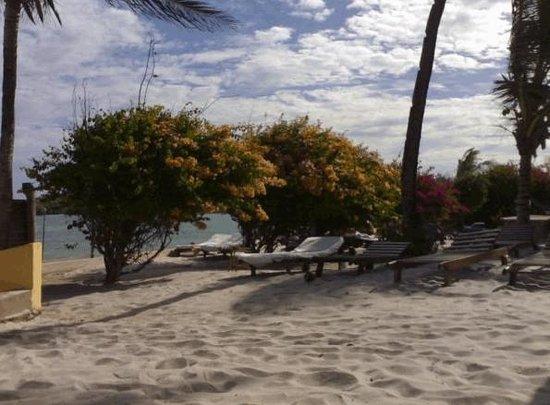 Aquarius Club: Lettini sulla spiaggia
