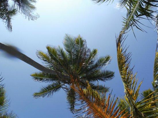Victoria House Resort & Spa: Palm trees