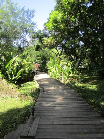 Cotton Tree Lodge : elevated walkways