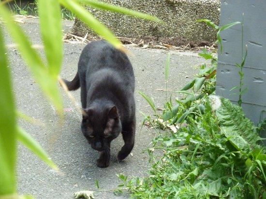 Giallo Limone : le chat de la maison en balade