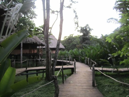 Cotton Tree Lodge: walkways to the cabanas