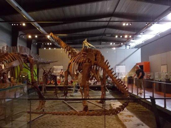 Musee des Dinosaures 'Dinosauria': un squelette de dinosaure