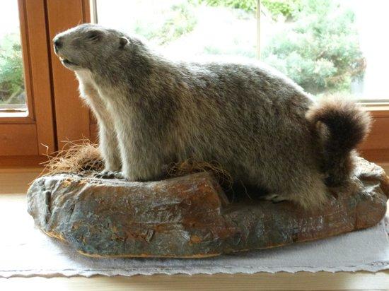 Gasthof Ascherwirt: A stuffed Marmot