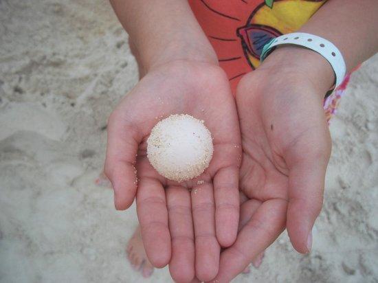 Grand Palladium Kantenah Resort and Spa: Turtle egg found on the beach