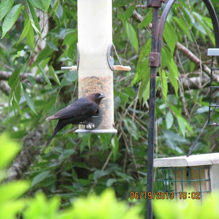 Enchanter Oceanview Suites: Watching the birds