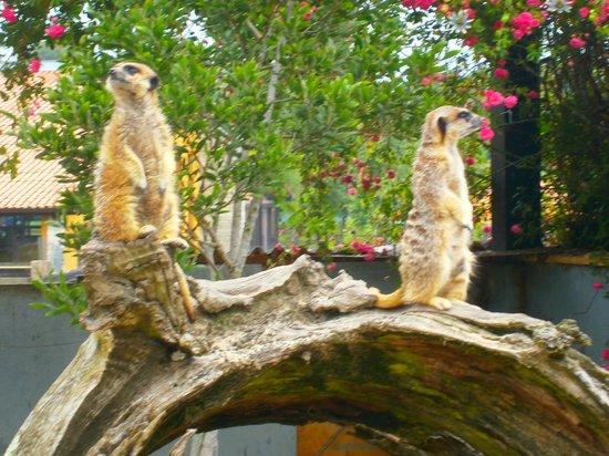 Las Anjanas de Isla: parque natural de Cabárceno, visita obligada