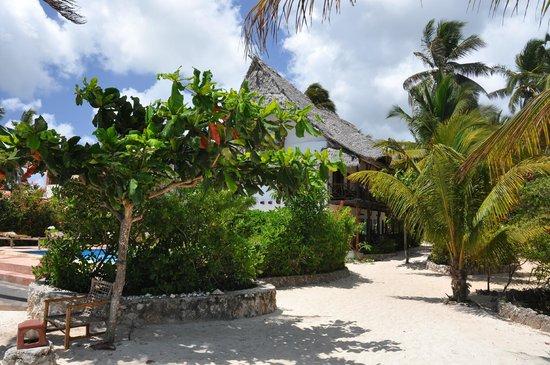 Casa Del Mar Hotel Jambiani: beach area