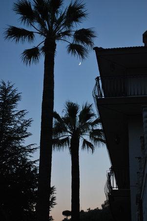 Villa Artemide: Palme Villa