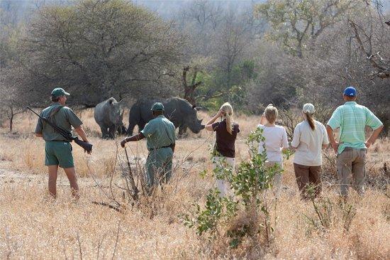 Rhino Walking Safaris at Plains Camp: Walking Safari