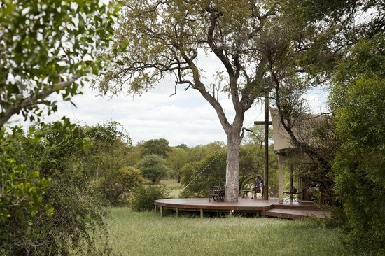 Rhino Walking Safaris at Plains Camp: Main camp