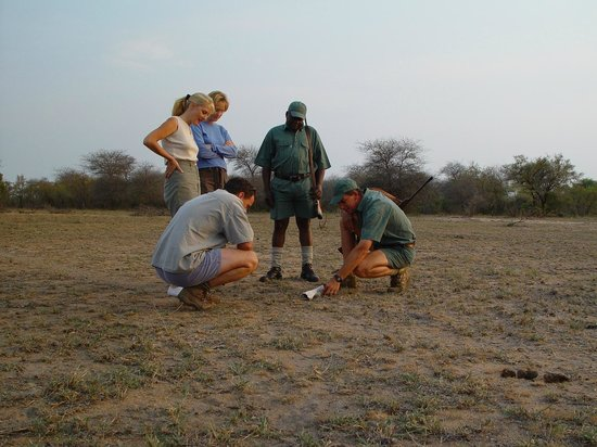 Rhino Walking Safaris at Plains Camp: Highly experienced guides