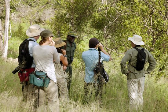 Rhino Walking Safaris at Plains Camp: Typical guided walk