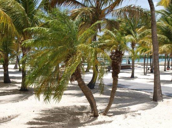 Blue Haven Resort: Blue Haven