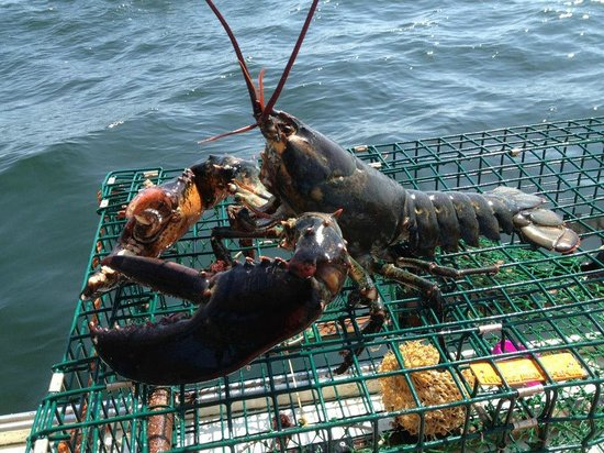 Perkins Cove Lobster Pound: Lobsters Caught by Owner
