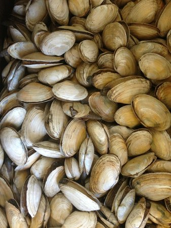Perkins Cove Lobster Pound : Fresh Clams