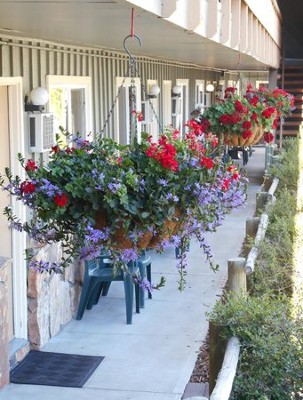 Pony Express Motel: gorgeous flowers at the motel