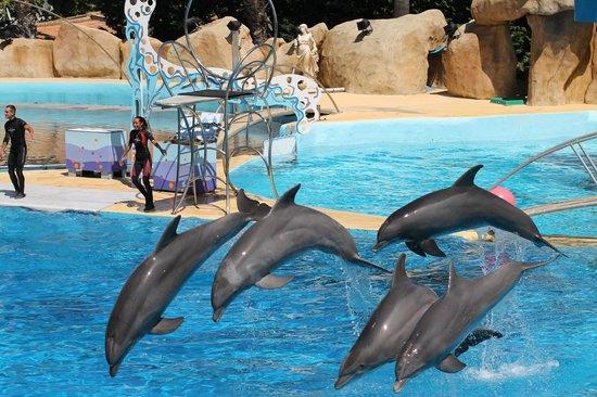 Les dauphins - Photo de Marineland, Antibes - TripAdvisor