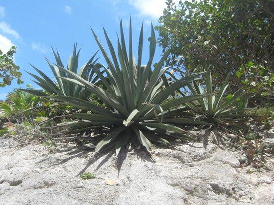 Park Royal Beach Resort Cancun: Area