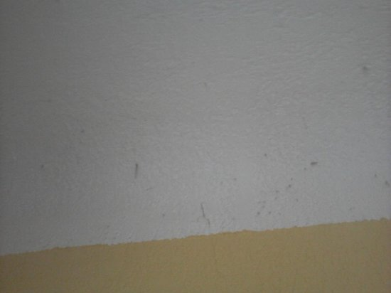 Abbeliss Polygone Hotel: toile d'araignée