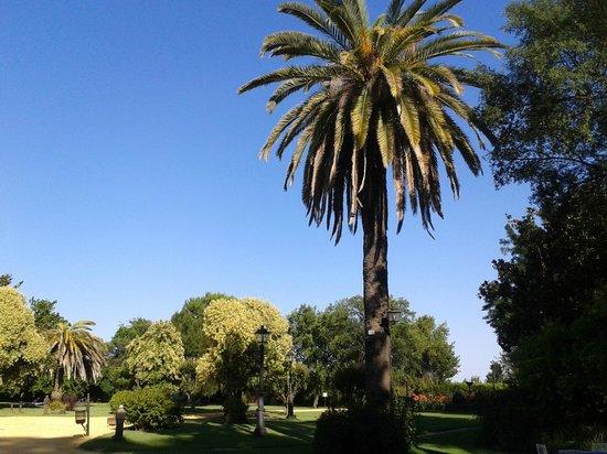 Hotel Cortijo El Esparragal : Jardín frente a la fachada principal del Cortijo que se podía ver desde mi habitación