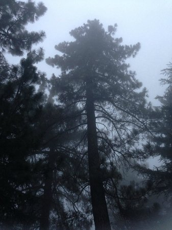 Henninger Flats Campground : The gloomy mist of the morning.