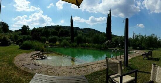 Agriturismo Podere San Lorenzo: pool area