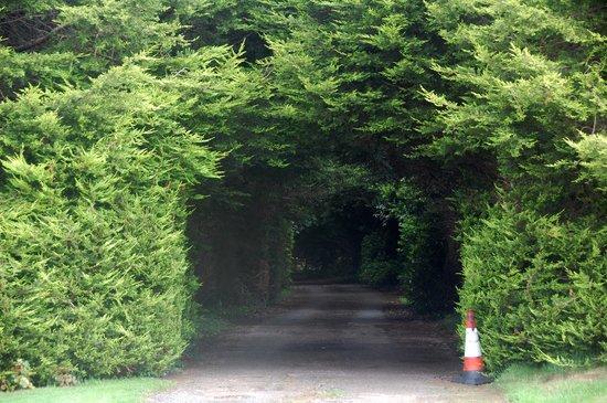 Heathfield Farm: The hedge driveway #1.