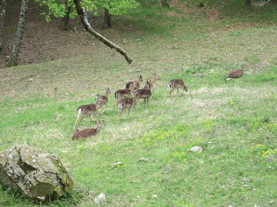 Le Limentre: il Parco dell'Acquerino