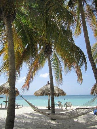 Divi Aruba Phoenix Beach Resort: In A Beach Hammock, Life Is Always Good