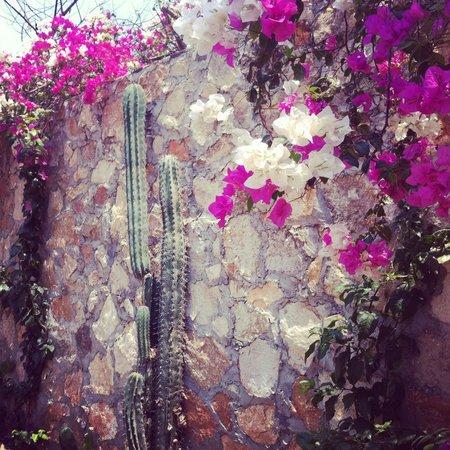 Casa Sol Zipolite: Garden