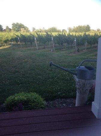 Sannino Vineyard B and B: view of the vineyards ..