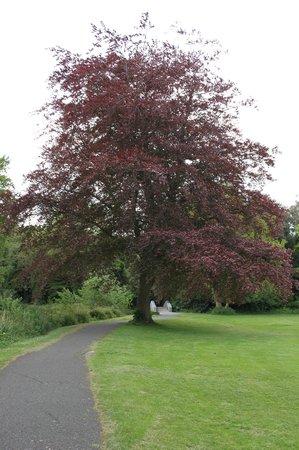 Rathfarnham Castle - Garden