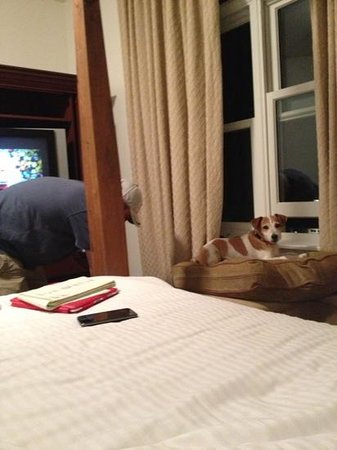 Clay Brook at Sugarbush: doggie friendly!