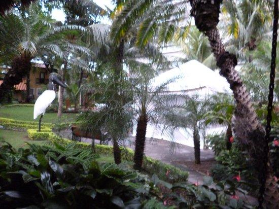 Hotel Cortez : Jardín