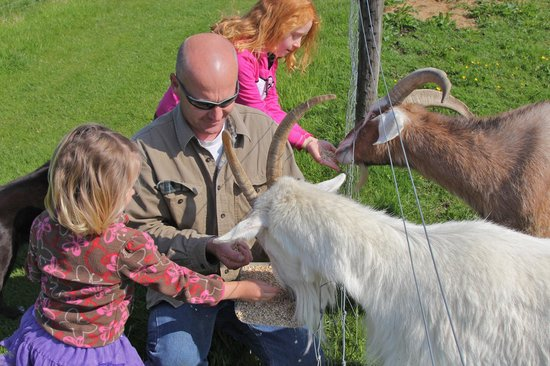 Croan Cottages: Francis with our kids feeding the goats.