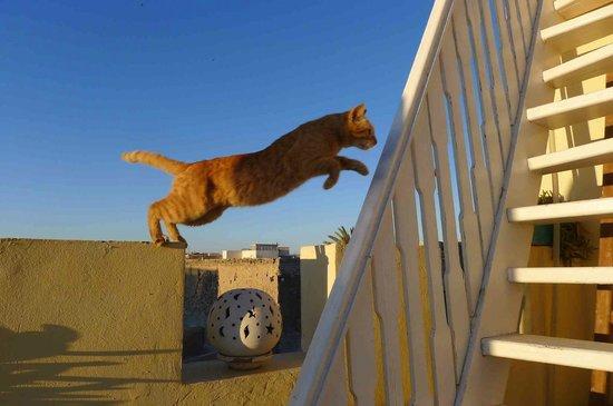 Riad Imik Imik: Rooftop jump