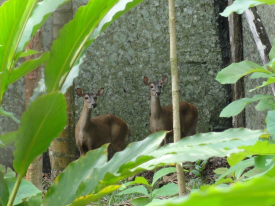 Tree of Life Wildlife Rescue Center and Botanical Gardens: Deers