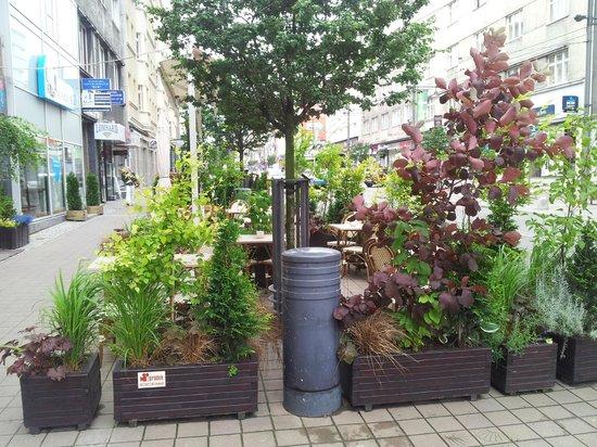 Cynamon: Like a real garden