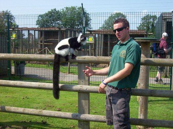 Woodside Wildlife Park: Meet the Lemurs