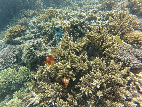 Lissenung Island Resort: Diving