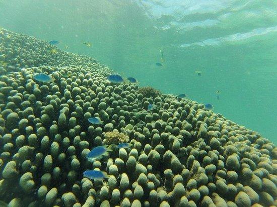 Lissenung Island Resort: Lissenung House Reef