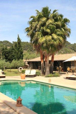 Agroturismo S'Hort De Son Caulleles : Pool