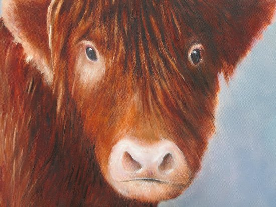 Norgate B&B: Peter's painting of a Highland Calf