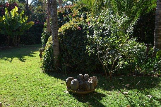 Armadale Boutique Lodge : courtyard garden