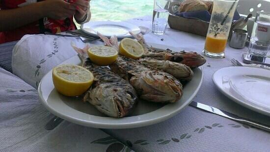 Drakos Taverna: Fresh Fish :)