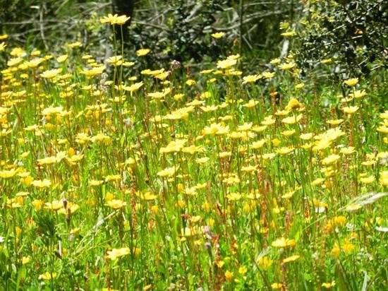 White Sand Massage & Spa: wildflowers dancing in the sunshine